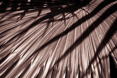 Photograph - Palm Leaves Copper Dsc05268 by Greg Kluempers