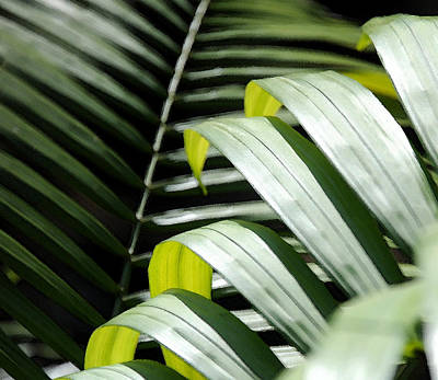 Wall Art - Photograph - Palm Leaves by Mark Sullivan