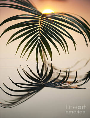 Leaf Photograph - Palm Light by Tim Gainey