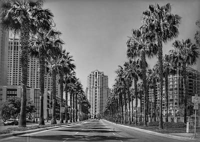 Photograph - Palm-lined Parkway B/w by Hanny Heim