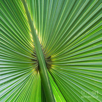 Art Print featuring the photograph Palm Love by Roselynne Broussard