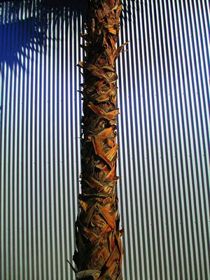 Palm On Sheet Metal Art Print