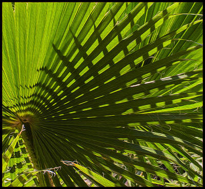 Digital Art - Palm Pattern No.1 by Mark Myhaver