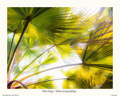 Palm Rays - Palma De Guadalupe Art Print