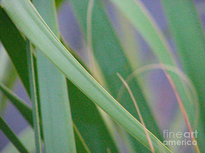 Palm Reeds Art Print by Val Miller