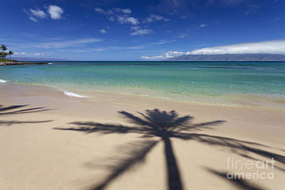 Photograph - Palm Shadow At Napili Bay by David Olsen