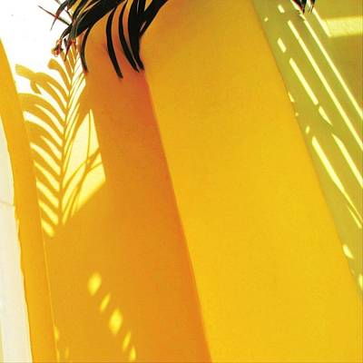 Painting - Palm Shadow On Yellow Wall - Square by Lyn Voytershark