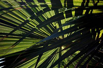Photograph - Palm Shadows by Joe Kozlowski