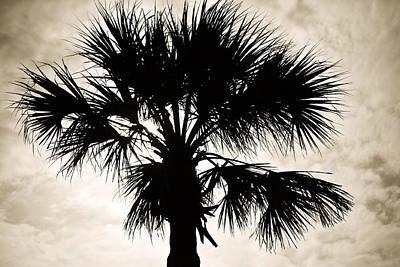 Sihlouette Photograph - Palm Sihlouette by Marilyn Hunt