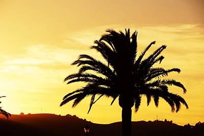 Photograph - Palm Silhouette by Michael Courtney