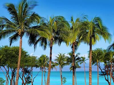 Photograph - Palm Skyline Maui by Jane Girardot