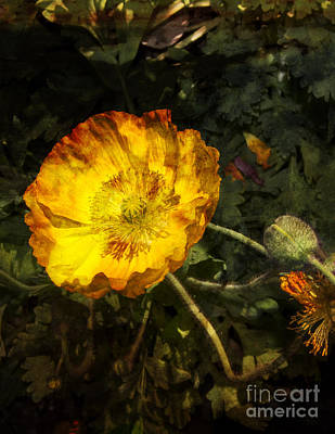 Digital Art - Palm Springs Poppy by Sandra Selle Rodriguez