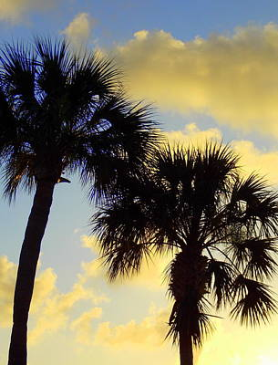 Photograph - Palm Sunrise by Sheri McLeroy