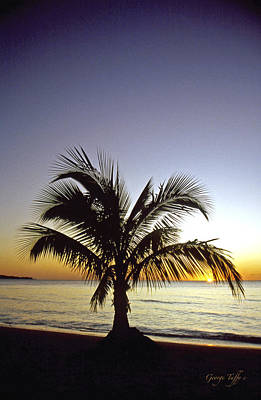 Photograph - Palm Sunset by George Tuffy