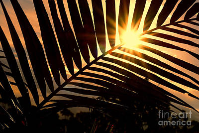 Photograph - Palm Sunset by Kaye Menner