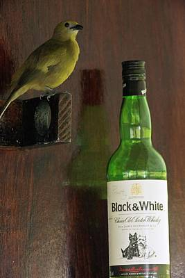 Palm Tanager And Whisky Bottle Art Print by Bob Gibbons