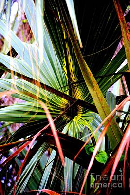 Palm Through The Fronds Art Print