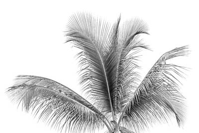 Photograph - Palm Tree Abstract by Susan Stone