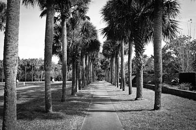 Photograph - Palm Tree Alley  by Jessica Brown