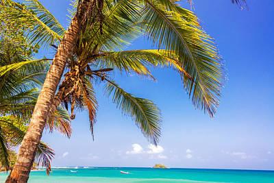 Palm Tree And Caribbean Art Print by Jess Kraft