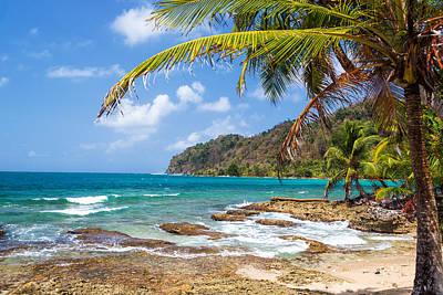 Palm Tree And Caribbean Sea Art Print by Jess Kraft
