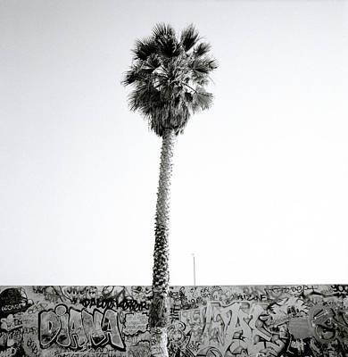 Palm Tree And Graffiti Art Print