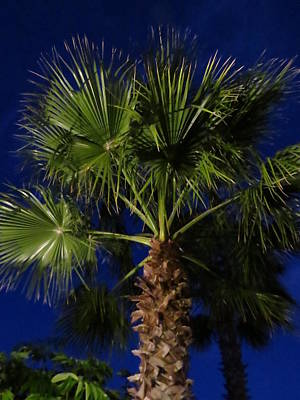 Iphone Case Photograph - Palm Tree At Night by Zina Stromberg