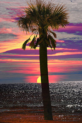 Palm Tree At Sunset Art Print