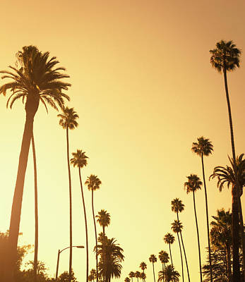 Sunset Photograph - Palm Tree At Sunset On Beverly Hills by Franckreporter
