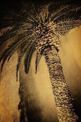 Palm Tree At The Aladdin Casino Art Print