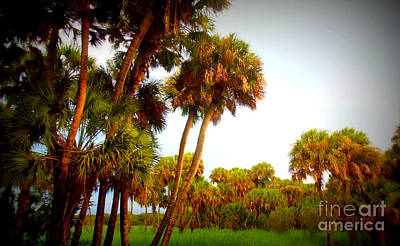 Photograph - Palm Tree Forest by Lou Ann Bagnall