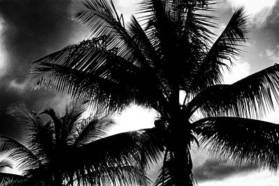 Saint Lucia Photograph - Palm Tree In Black And White by Brendan Reals