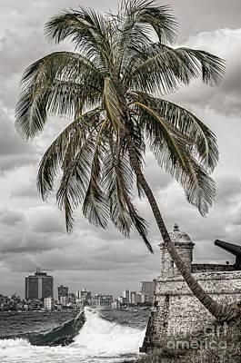Palm Tree In Havana Bay Art Print