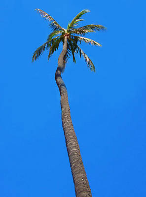 Digital Art - Palm Tree by Kara  Stewart