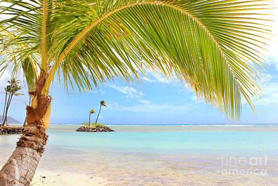 Photograph - Palm Tree by Kristine Merc