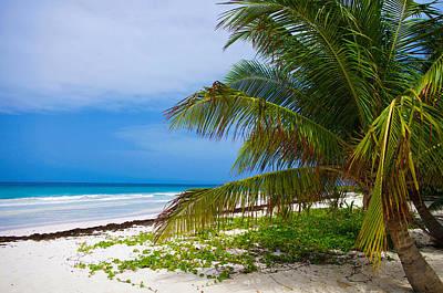 Bridgetown Photograph - Palm Tree by Lamyl Hammoudi
