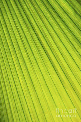 Leaf Photograph - Palm Tree Leaf Abstract by Elena Elisseeva