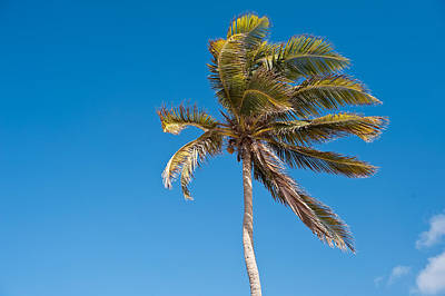 Photograph - Palm Tree by Marek Poplawski