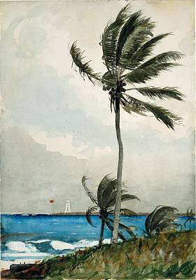 Wall Art - Painting - Palm Tree Nassau by Winslow Homer