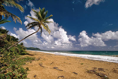 Palm Tree On Maunabo Beach Puerto Rico Print by George Oze