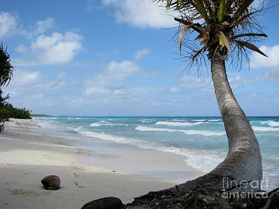 Photograph - Palm Tree On The Beach by Jola Martysz