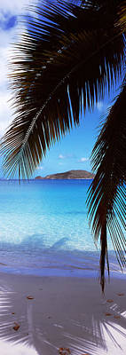 West Indies Photograph - Palm Tree On The Beach, Maho Bay by Panoramic Images