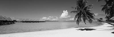 Beach Nobody Photograph - Palm Tree On The Beach, Moana Beach by Panoramic Images