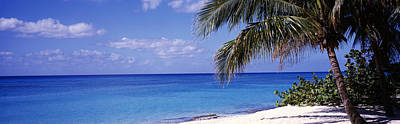 West Bay Photograph - Palm Tree On The Beach, Seven Mile by Panoramic Images