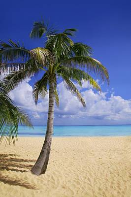 Palm Tree On Tropical Beach Art Print by Don Hammond