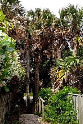 Photograph - Palm Tree Path by Enid Gough