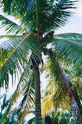 Photograph - Palm Tree Quintana Roo by D Hackett