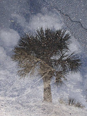 Palm Tree Reflection Art Print by Michel Mata