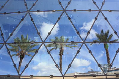 Photograph - Palm Tree Reflections by Danielle Groenen