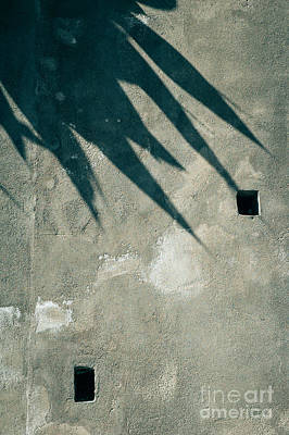 Photograph - Palm Tree Shadow On Wall With Holes by Silvia Ganora